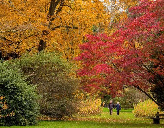 Tình yêu như trở lại ở Westonbirt Arboretum - Ảnh: express