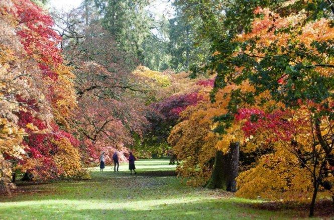 Du khách thưởng thức mùa thu ở Westonbirt Arboretum - Ảnh: stylist