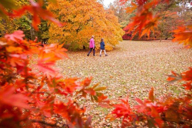 Tháng 10 ở công viên quốc gia Westonbirt Arboretum - Ảnh: wiki
